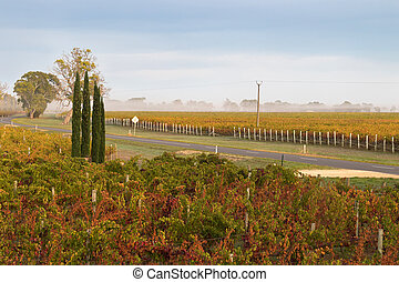 Foggy view of vineyard in the morning in Coonawarra winery...