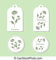Echinacea leaves and flowers