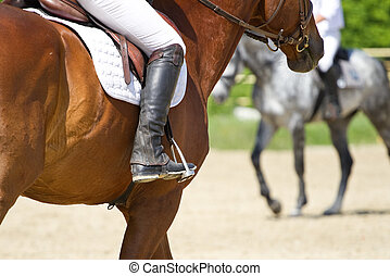 Dressage horse rides in the arena