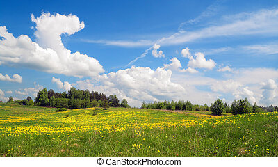 Springs field landscape - Field of flowers, may  landscape
