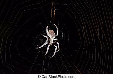 Australian orb weaver spider