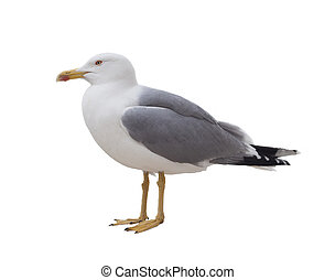 white bird albatross - albatross bird isolated on white...