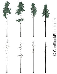 pinetrees set in flat colors - Set of pinetrees and pinetree...