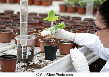 Biologist pouring liquid into flower pot with sprout - Young...