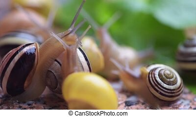 Snails on wet sidewalk - Close-up of a snails on sidewalk at...
