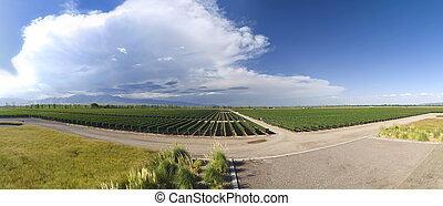 Vineyard panorama - Panorama of a large vineyard in Mendoza,...