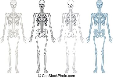 Different diagram of human skeleton