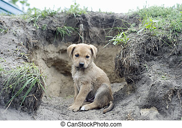 Puppy -  Homeless puppy near the hole