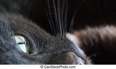 Closeup shot of a black cat's eye