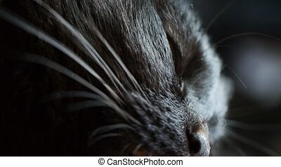 Tight shot of a black cat's highly detailed yellow / gold...