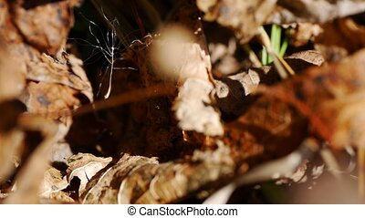 Macro View of fuzz in Spider Web - Macro View of Spider Web