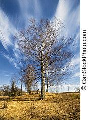 birch trees in a summer forest under sun sky