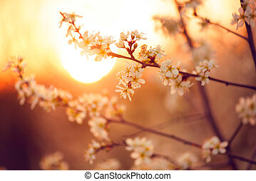 Spring blossom background. Beautiful nature scene with blooming tree and sun flare