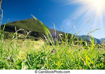 Beautiful nature landscape - Alpine meadow