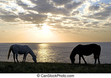 Horses - Two horses in front of the sea at sunset
