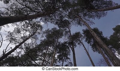 Wind blowing and rustling tree branches static camera 25 fps...