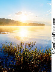 detail of grass halm at a lake in magical morning time with dawning sun.
