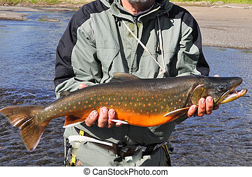 Arctic char trophy fishing Arctic char, caught on a...