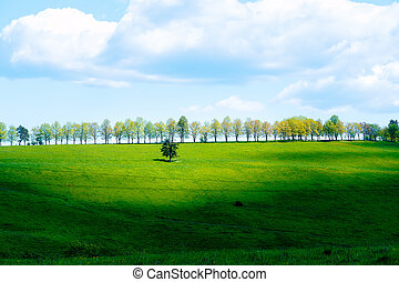 Avenue of trees on the horizon and blue sky. - Avenue of...