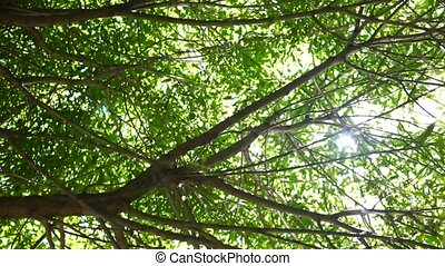 Sunlight into tree branches with leaves - clip