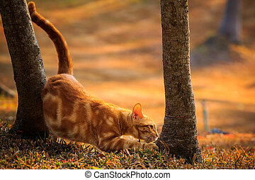 domestic orange fur cat relaxing in park with beautiful...