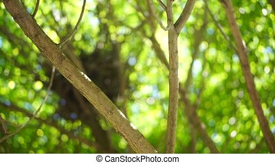 Tree branches with green leaves - clip