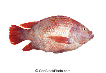 Tub Tim Fresh fish - Fresh fish isolated on the white...