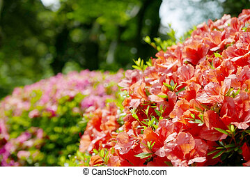 Closeup red flowers and plants in park - Closeup red flowers...