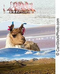 (my,  collage, viaje,  photos),  -, Plano de fondo, imágenes,  Bolivia