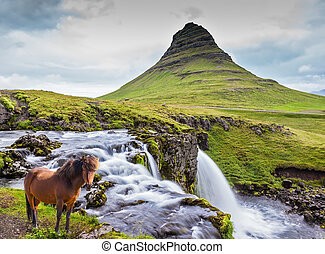 The well-groomed Icelandic horse is grazed - Foggy day in...