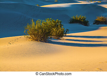 Long morning shadows from dry desert bushes - Early morning...
