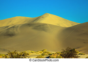 The gentle curves of yellow sand dunes. Dry bushes provide...
