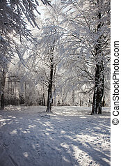 Forest clearing, covered with snow. Sunny winter Christmas...