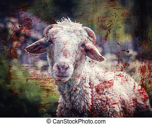 Portrait of sheep in a meadow with blood stains. Photos in a...