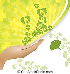 Ginkgo biloba plant in hand background