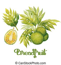 Watercolor breadfruit set. Hand painted exotic plants...
