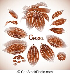 Graphic cocoa fruit collection isolated on white background....