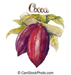 Watercolor cocoa fruits isolated on white background. Hand...