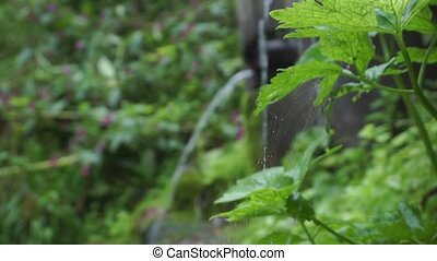 Spider web by a small creek, shallow focus clip