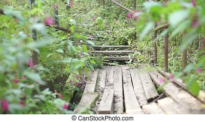 Broken wooden bridge and stairs in the forest - Steadycam...