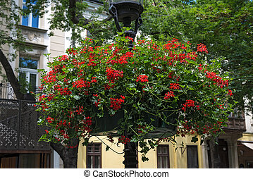street lamp with hanging flower baskets