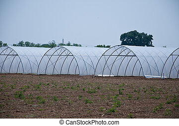 group of new greenhouses that serve to make the vegetables grow