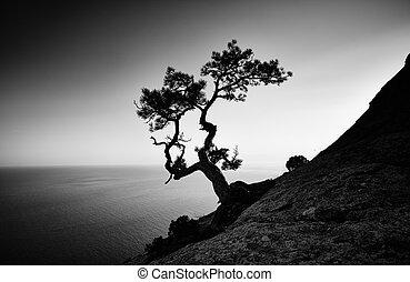 albero, e, mare, a, sunset., Crimea, paesaggio,