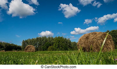 Hay bale farm / Hay bale on the field after harvest