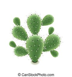Prickly pear cactus isolated on white vector - Prickly pear...