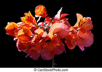 Ornamental plant - Blossoming ornamental plant used as a...