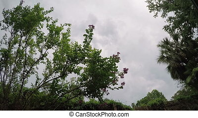 Tropical plants storm clouds - Florida summer tropical...