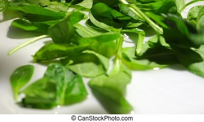 Falling green leafs of spinach, slow motion video