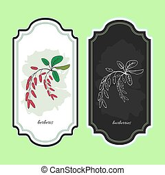 Vector illustration barberries. Medicinal berry.For...