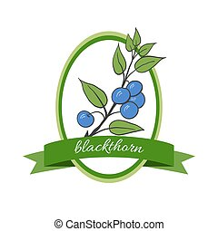 Handdrawn vector illustration blackthorn. Medicinal...